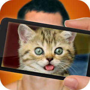 What cat are you? face scanner